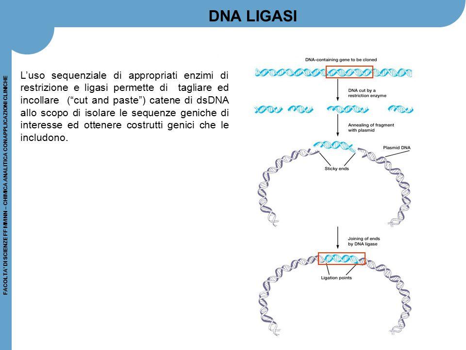 FACOLTA' DI SCIENZE FF MM NN – CHIMICA ANALITICA CON APPLICAZIONI CLINICHE L'uso sequenziale di appropriati enzimi di restrizione e ligasi permette di