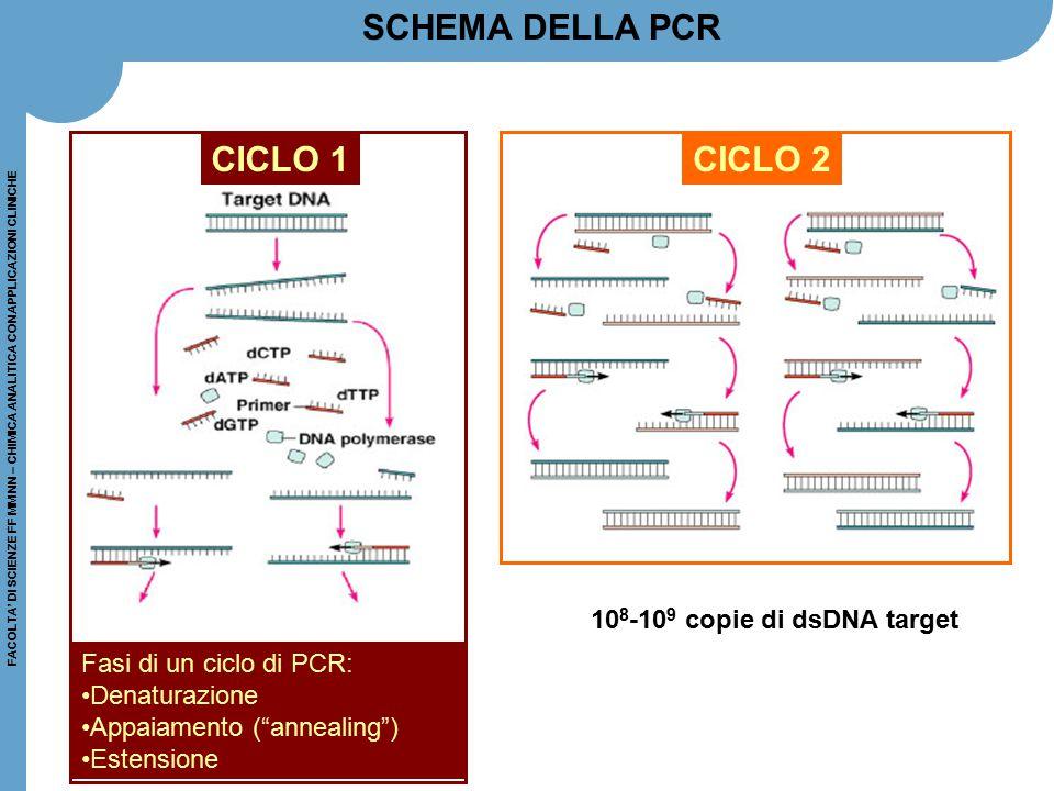 FACOLTA' DI SCIENZE FF MM NN – CHIMICA ANALITICA CON APPLICAZIONI CLINICHE CICLO 2 SCHEMA DELLA PCR 10 8 -10 9 copie di dsDNA target CICLO 1 Fasi di u