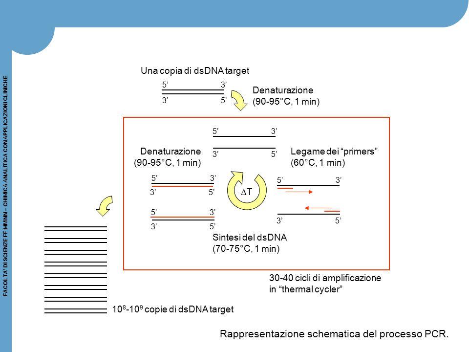 FACOLTA' DI SCIENZE FF MM NN – CHIMICA ANALITICA CON APPLICAZIONI CLINICHE 5' 3' 3' 5' 5' 3' 3' 5' 5' 3' 3' 5' 5' 3' 3' 5' 5' 3' Denaturazione (90-95°