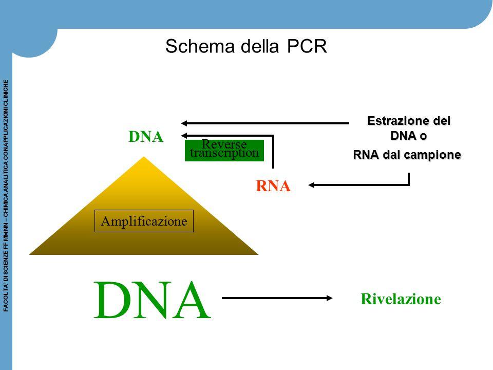 FACOLTA' DI SCIENZE FF MM NN – CHIMICA ANALITICA CON APPLICAZIONI CLINICHE Schema della PCR DNA RNA DNA Estrazione del DNA o DNA o RNA dal campione Ri