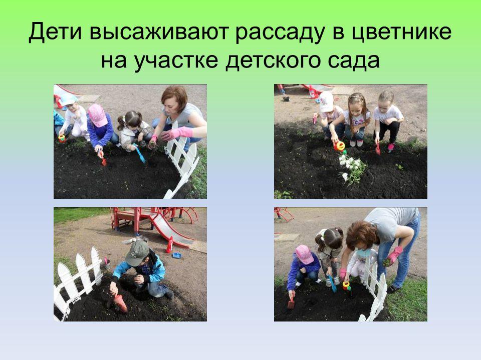 Дети высаживают рассаду в цветнике на участке детского сада