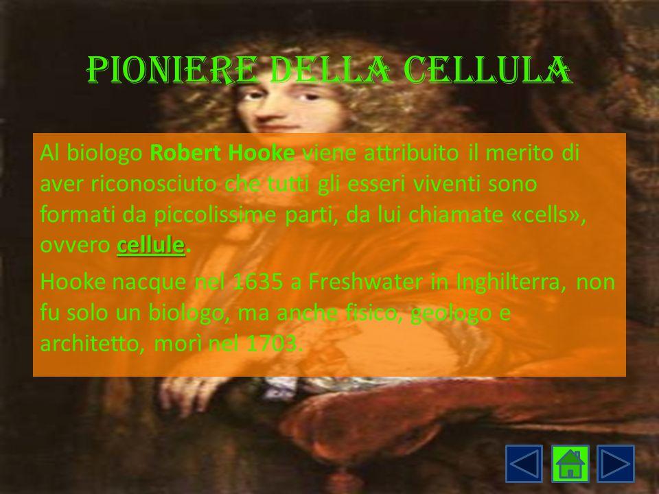 Pioniere della cellula cellule Al biologo Robert Hooke viene attribuito il merito di aver riconosciuto che tutti gli esseri viventi sono formati da pi