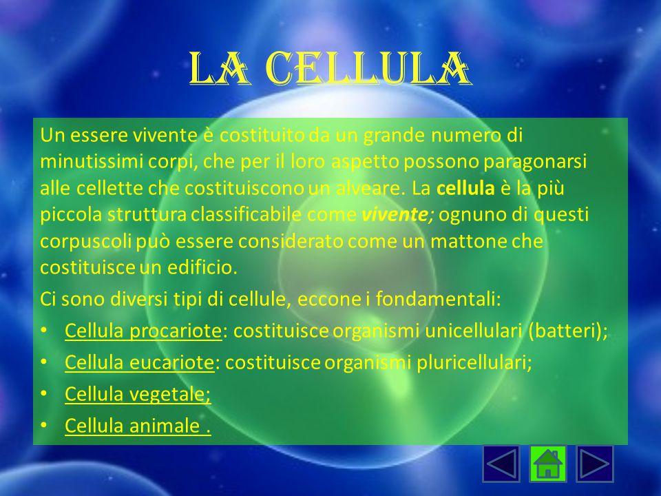 La cellula Un essere vivente è costituito da un grande numero di minutissimi corpi, che per il loro aspetto possono paragonarsi alle cellette che cost