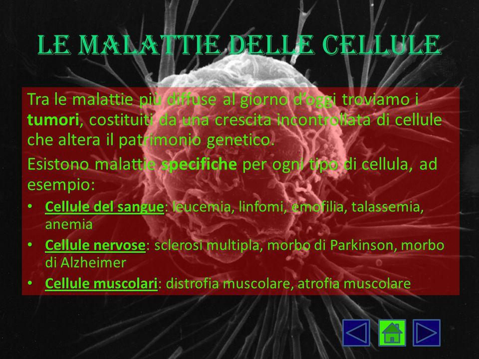 Le malattie delle cellule Tra le malattie più diffuse al giorno d'oggi troviamo i tumori, costituiti da una crescita incontrollata di cellule che alte