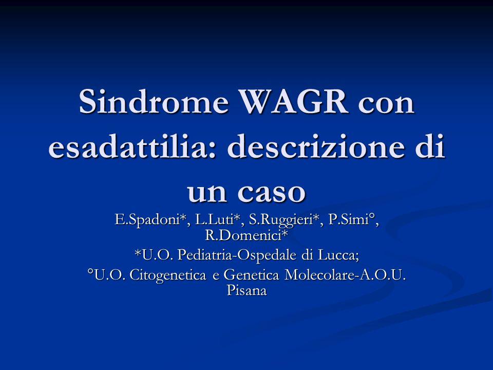 Sindrome WAGR con esadattilia: descrizione di un caso E.Spadoni*, L.Luti*, S.Ruggieri*, P.Simi°, R.Domenici* *U.O.