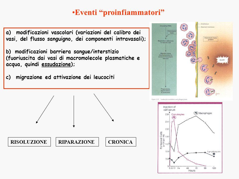 a) modificazioni vascolari (variazioni del calibro dei vasi, del flusso sanguigno, dei componenti intravasali); b) modificazioni barriera sangue/interstizio (fuoriuscita dai vasi di macromolecole plasmatiche e acqua, quindi essudazione); c) migrazione ed attivazione dei leucociti RISOLUZIONECRONICARIPARAZIONE Eventi proinfiammatori