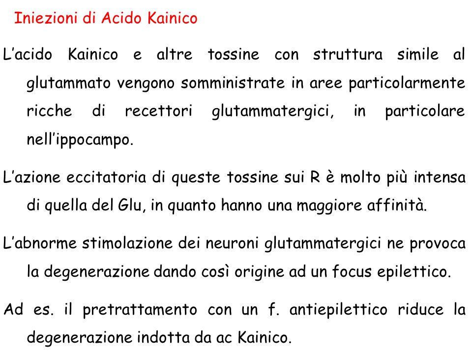 Iniezioni di Acido Kainico L'acido Kainico e altre tossine con struttura simile al glutammato vengono somministrate in aree particolarmente ricche di recettori glutammatergici, in particolare nell'ippocampo.