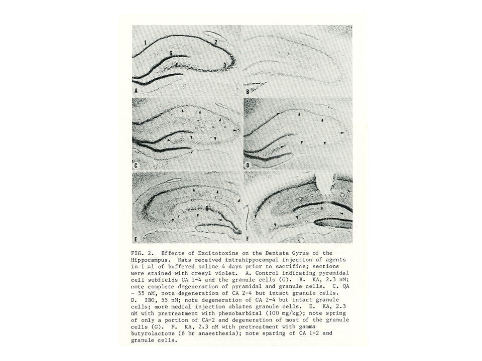 Iniezioni nell'Area Tempesta Si effettuano delle iniezioni locali nell'AREA TEMPESTA di antagonisti del GABA, come la Picrotossina o la Bicucullina, oppure agonisti glutammatergici, come l'ac Kainico, l'NMDA, l'Aspartato, il Glutammato.
