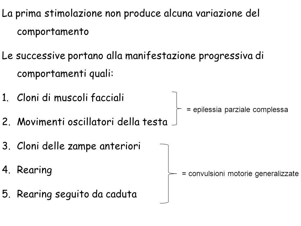 La prima stimolazione non produce alcuna variazione del comportamento Le successive portano alla manifestazione progressiva di comportamenti quali: 1.