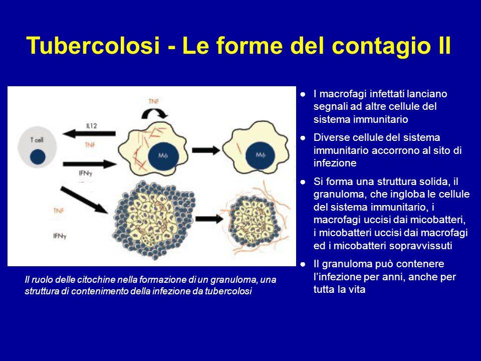 Tubercolosi - Le forme del contagio II ●I macrofagi infettati lanciano segnali ad altre cellule del sistema immunitario ●Diverse cellule del sistema i