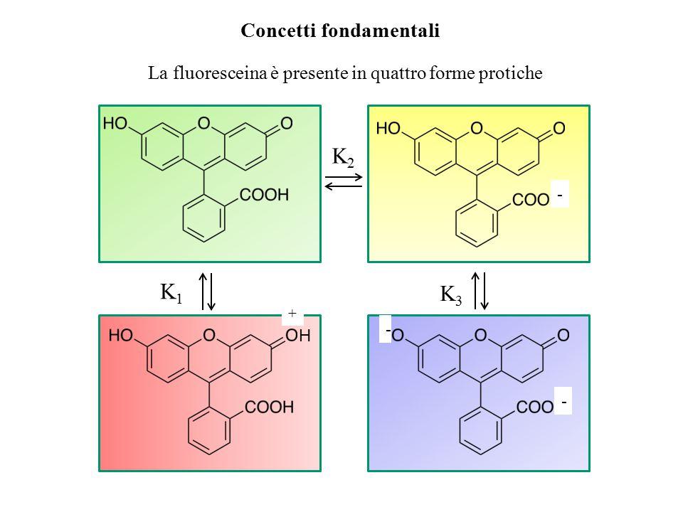 Concetti fondamentali - - H + Il dianione della fluoresceina è la specie con l'assorbività più alta, con un massimo a 490 nm