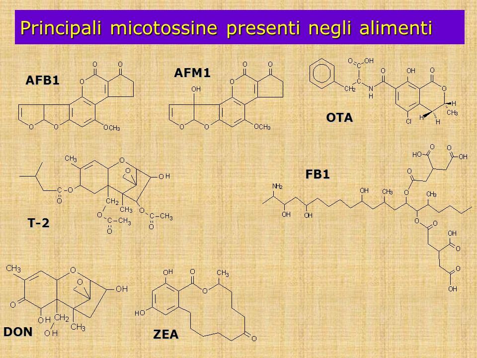 Principali micotossine presenti negli alimenti DON T-2 ZEA OTA AFB1 AFM1 FB1