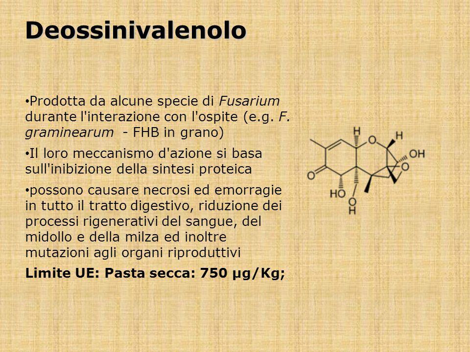 Deossinivalenolo Prodotta da alcune specie di Fusarium durante l'interazione con l'ospite (e.g. F. graminearum - FHB in grano) Il loro meccanismo d'az