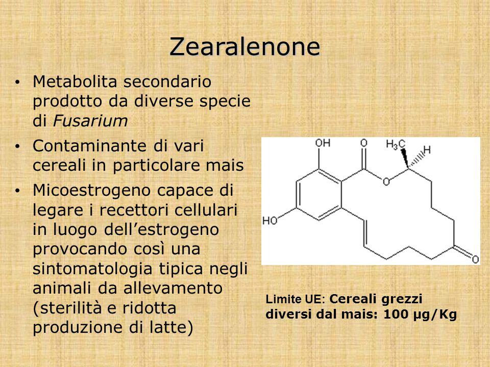 Zearalenone Metabolita secondario prodotto da diverse specie di Fusarium Contaminante di vari cereali in particolare mais Micoestrogeno capace di lega