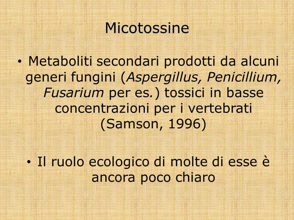 Micotossine Metaboliti secondari prodotti da alcuni generi fungini (Aspergillus, Penicillium, Fusarium per es.) tossici in basse concentrazioni per i