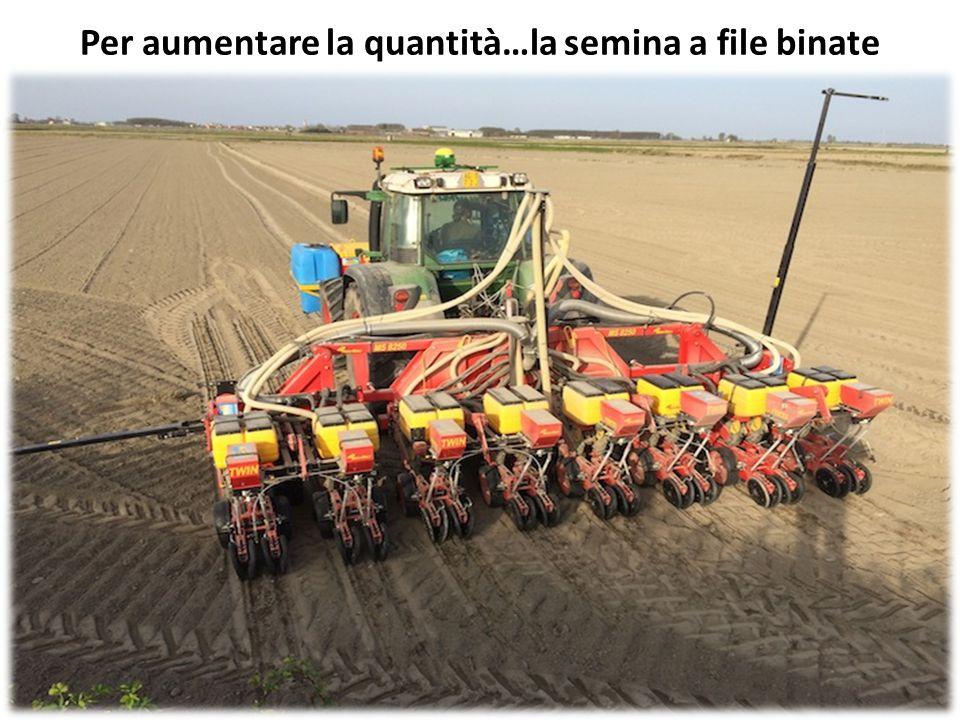 Per aumentare la quantità…la semina a file binate
