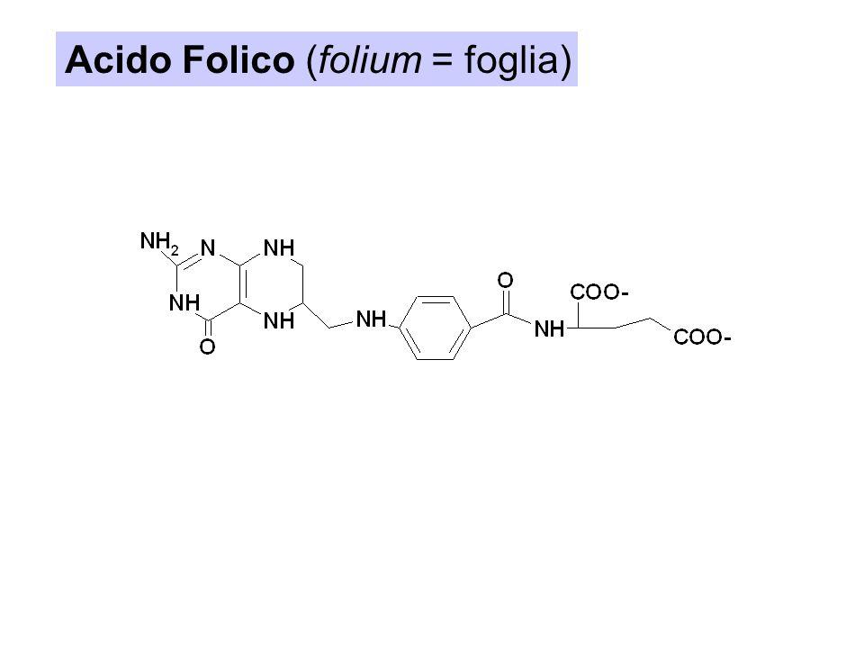 Acido Folico (folium = foglia)