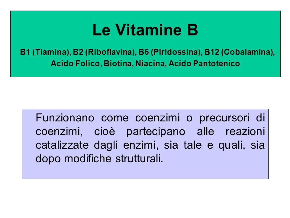 Le Vitamine B B1 (Tiamina), B2 (Riboflavina), B6 (Piridossina), B12 (Cobalamina), Acido Folico, Biotina, Niacina, Acido Pantotenico Funzionano come co