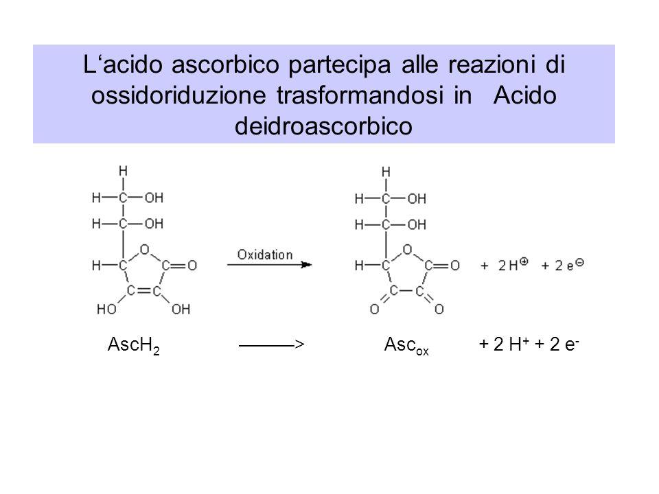 L'acido ascorbico partecipa alle reazioni di ossidoriduzione trasformandosi in Acido deidroascorbico AscH 2 ———> Asc ox + 2 H + + 2 e -