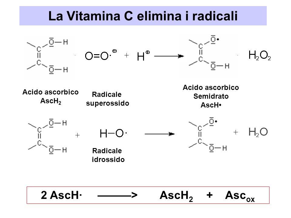La Vitamina C elimina i radicali +++ + + 2 AscH· ———> AscH 2 + Asc ox Acido ascorbico AscH 2 Radicale superossido Acido ascorbico Semidrato AscH Radic