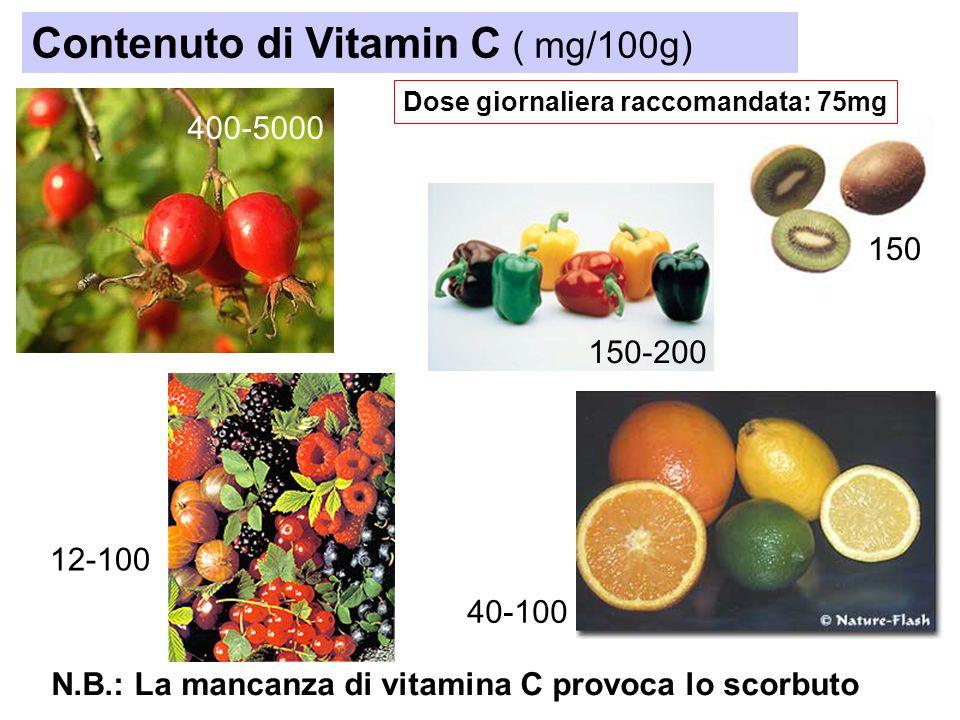 400-5000 Contenuto di Vitamin C ( mg/100g) 150 150-200 12-100 40-100 Dose giornaliera raccomandata: 75mg N.B.: La mancanza di vitamina C provoca lo sc