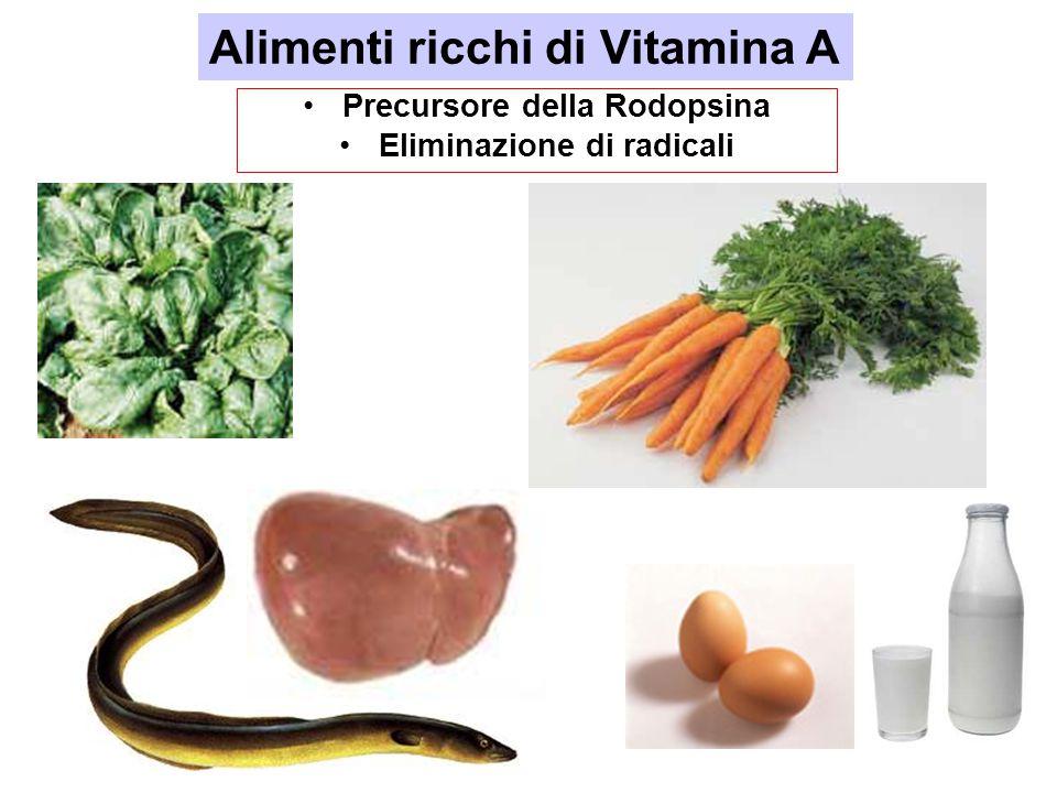 Alimenti ricchi di Vitamina A Precursore della Rodopsina Eliminazione di radicali