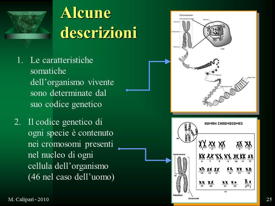 M. Calipari - 201025 Alcune descrizioni 1.Le caratteristiche somatiche dell'organismo vivente sono determinate dal suo codice genetico 2.Il codice gen