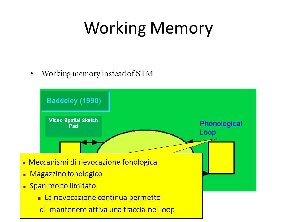 Working Memory Working memory instead of STM Meccanismi di rievocazione fonologica Magazzino fonologico Span molto limitato La rievocazione continua permette di mantenere attiva una traccia nel loop Visuo Spatial Sketch Pad