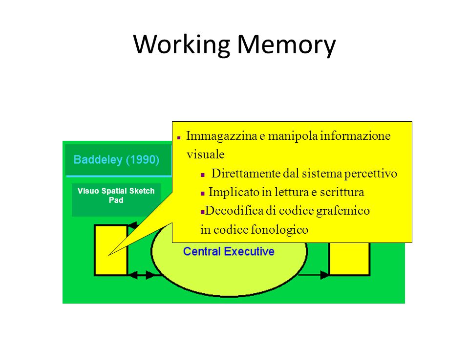 Working Memory Immagazzina e manipola informazione visuale Direttamente dal sistema percettivo Implicato in lettura e scrittura Decodifica di codice grafemico in codice fonologico