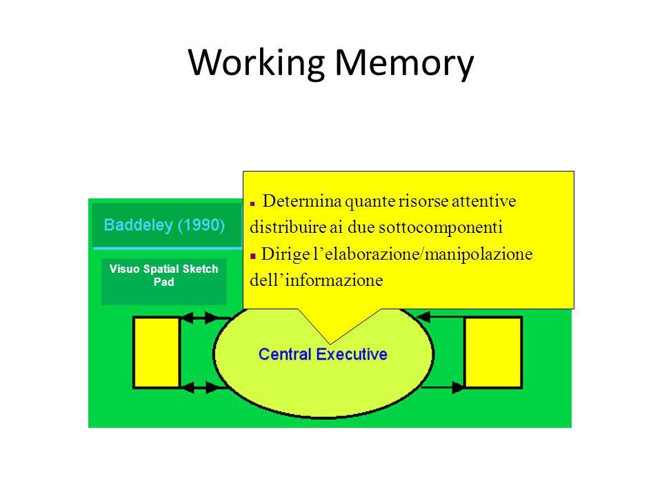 Working Memory Determina quante risorse attentive distribuire ai due sottocomponenti Dirige l'elaborazione/manipolazione dell'informazione Visuo Spatial Sketch Pad
