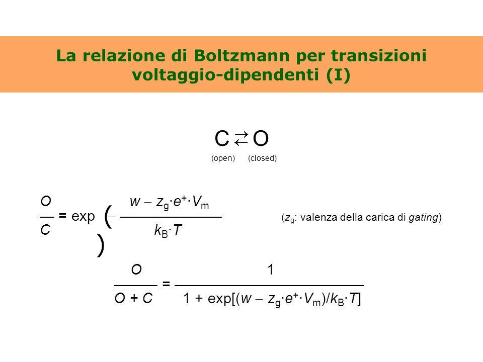 La relazione di Boltzmann per transizioni voltaggio-dipendenti (I) O w  z g ·e + ·V m — = exp  ——————— (z g : valenza della carica di gating) C k B
