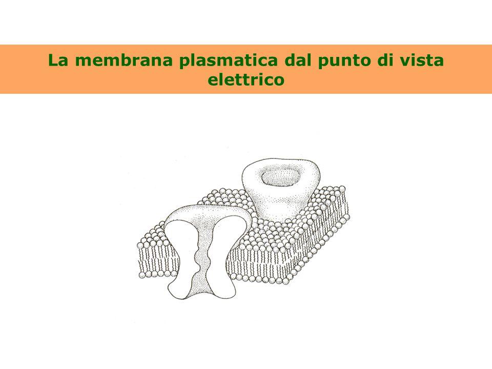 La membrana plasmatica dal punto di vista elettrico