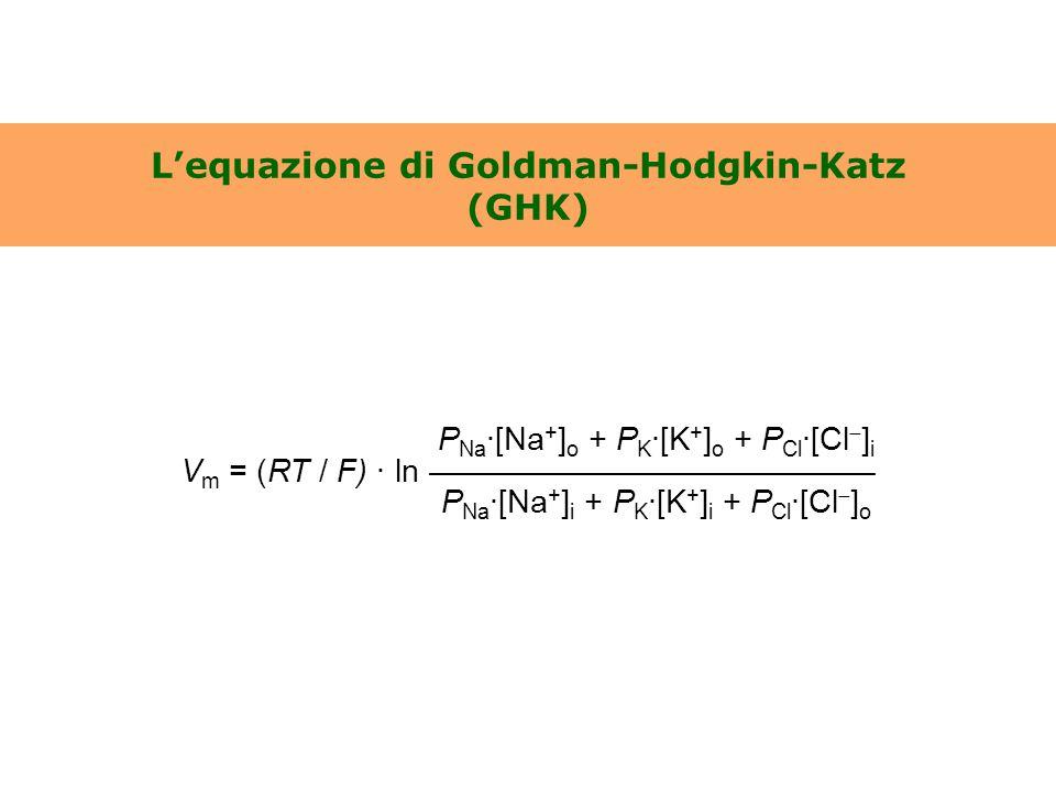 L'equazione di Goldman-Hodgkin-Katz (GHK) P Na ·[Na + ] o + P K ·[K + ] o + P Cl ·[Cl  ] i V m = (RT / F) · ln —————————————— P Na ·[Na + ] i + P K ·