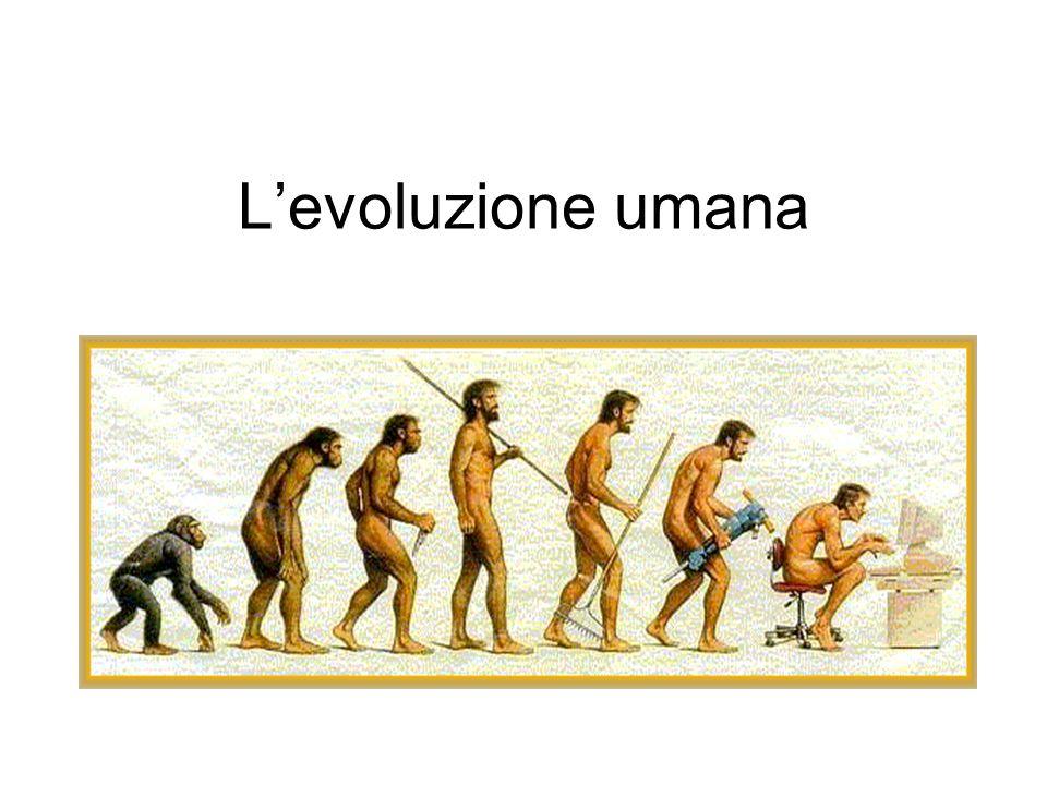 Introduzione LA CLASSIFICAZIONE DEGLI UMANI: Australopithcus- è vissuto tra il 3,7-1,2 milioni di anni fa.