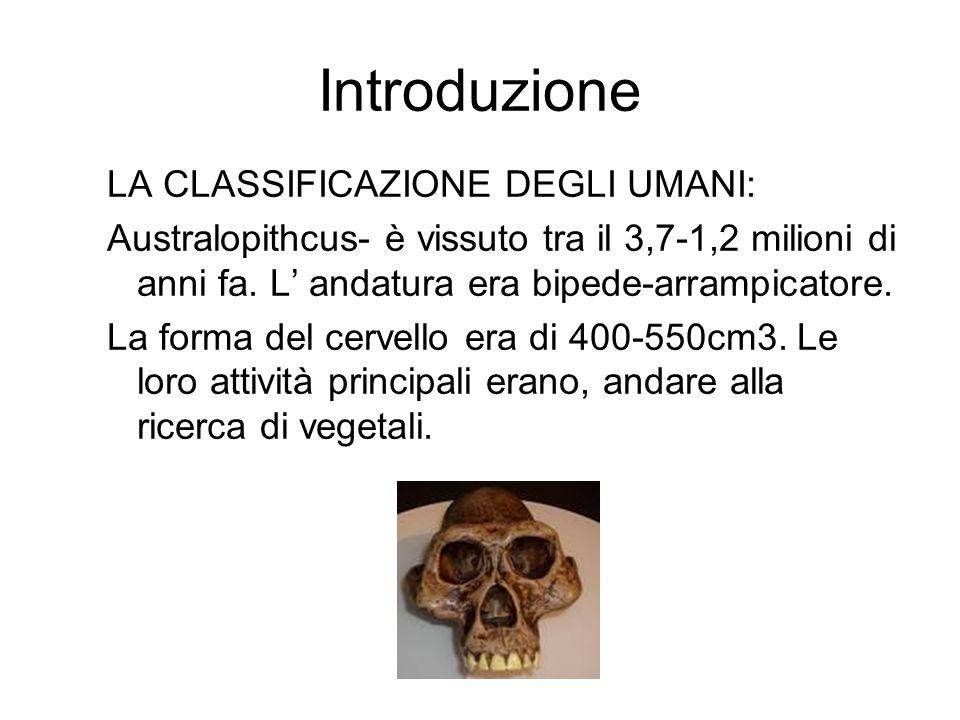 Introduzione LA CLASSIFICAZIONE DEGLI UMANI: Australopithcus- è vissuto tra il 3,7-1,2 milioni di anni fa. L' andatura era bipede-arrampicatore. La fo