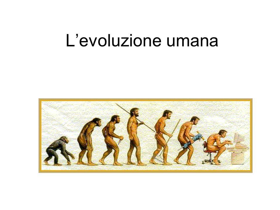 Australopithecus Periodo: 3,7-1,2 milioni di anni fa Andatura: bipede-arrampicatore Capacità cranica: 400-550 cm 3 Attività: ricerca vegetali per nutrirsi