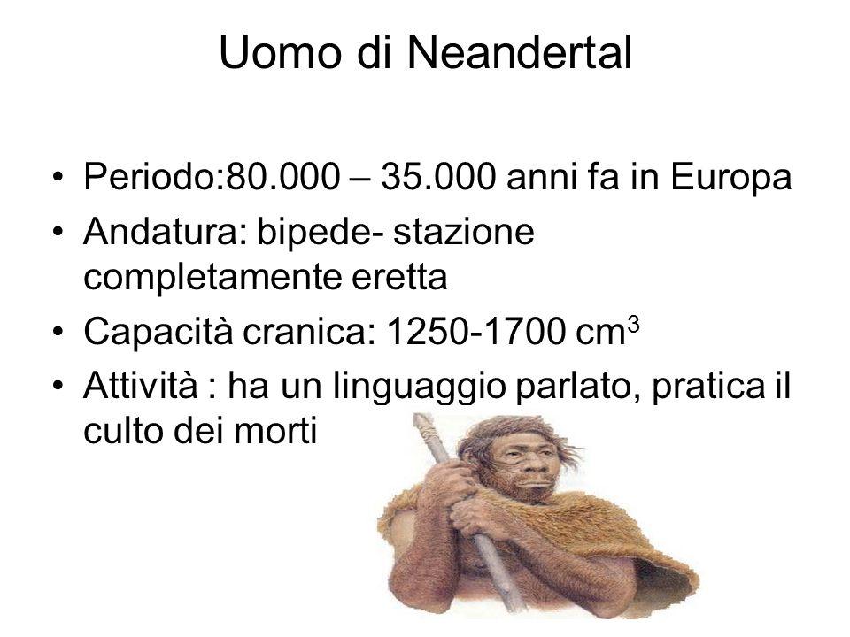 Uomo di Neandertal Periodo:80.000 – 35.000 anni fa in Europa Andatura: bipede- stazione completamente eretta Capacità cranica: 1250-1700 cm 3 Attività