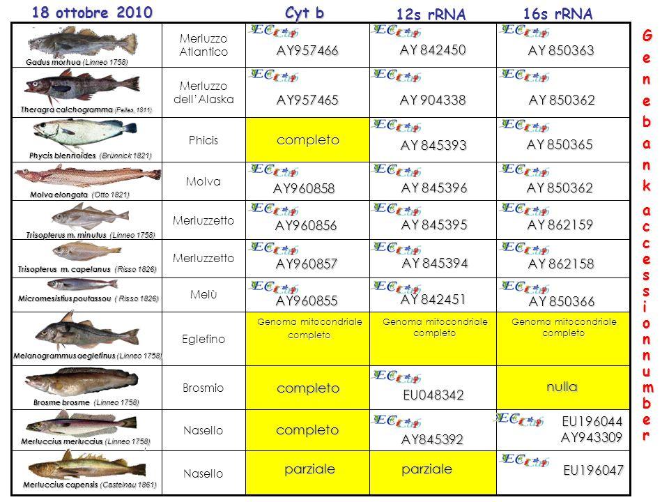 AY845392 EU048342 Nasello Brosmio Genoma mitocondriale completo Eglefino Melù Merluzzetto Molva Nasello completo Phicis Merluzzo dell'Alaska Merluzzo