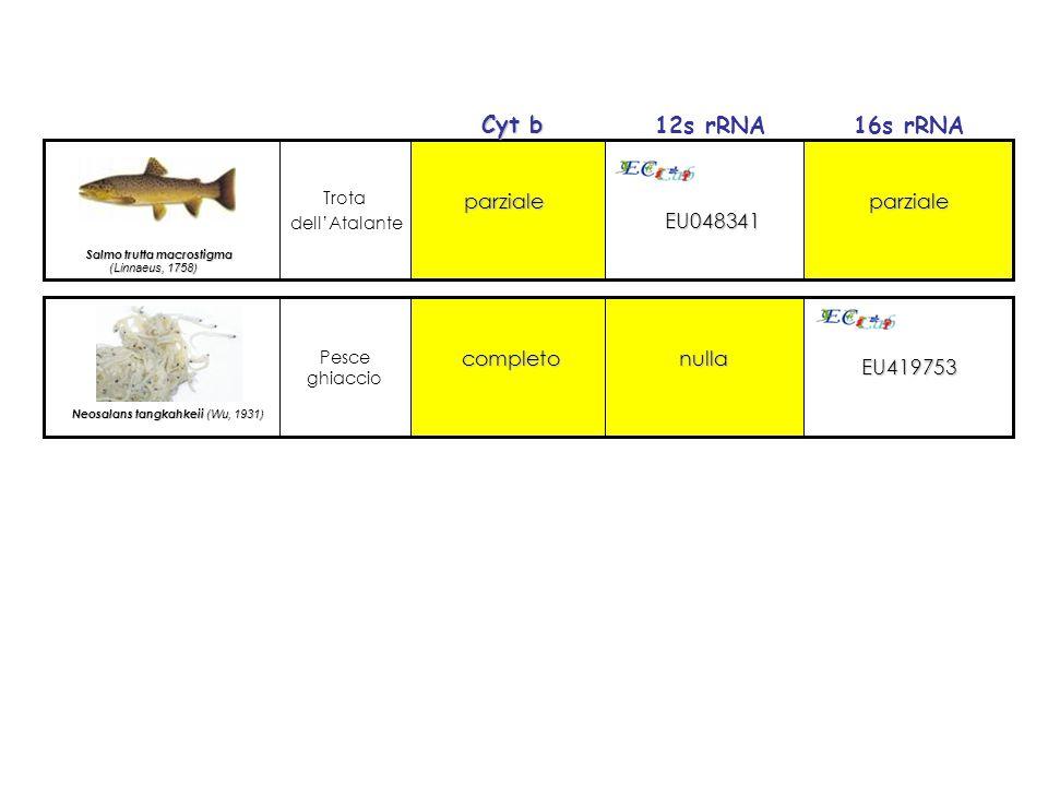 Trota dell'Atalante Salmo trutta macrostigma (Linnaeus, 1758) (Linnaeus, 1758) EU048341 parzialeparziale Pesce ghiaccio Neosalans tangkahkeii (Wu, 193