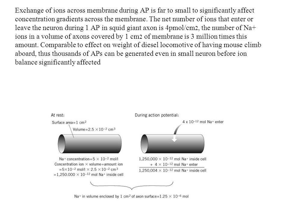 Exchange of ions across membrane during AP is far to small to significantly affect concentration gradients across the membrane.