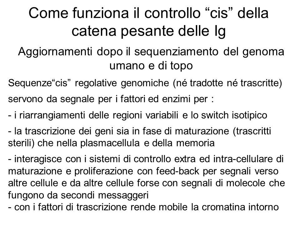 """Come funziona il controllo """"cis"""" della catena pesante delle Ig Aggiornamenti dopo il sequenziamento del genoma umano e di topo Sequenze""""cis"""" regolativ"""