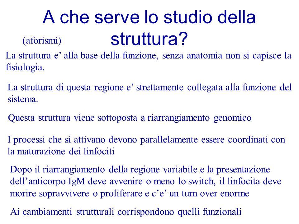 A che serve lo studio della struttura? La struttura e' alla base della funzione, senza anatomia non si capisce la fisiologia. La struttura di questa r