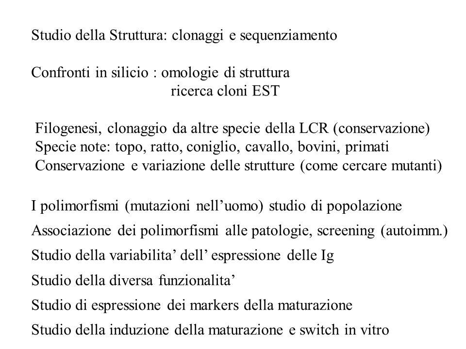Studio della Struttura: clonaggi e sequenziamento Confronti in silicio : omologie di struttura ricerca cloni EST Filogenesi, clonaggio da altre specie