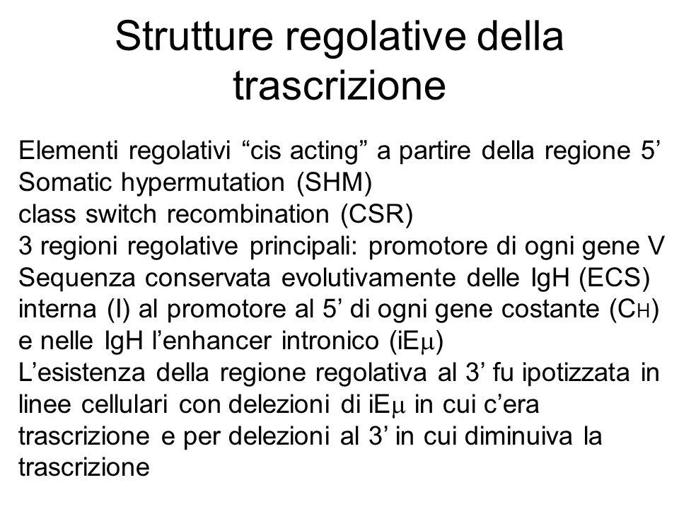 """Strutture regolative della trascrizione Elementi regolativi """"cis acting"""" a partire della regione 5' Somatic hypermutation (SHM) class switch recombina"""