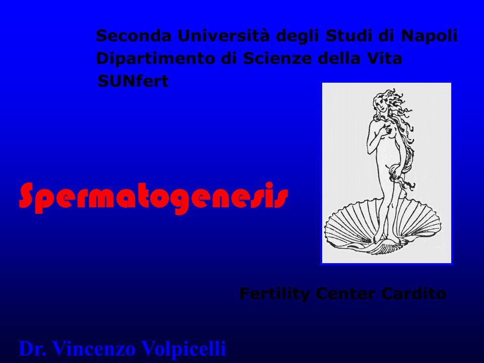 Spermatogenesis Dr.