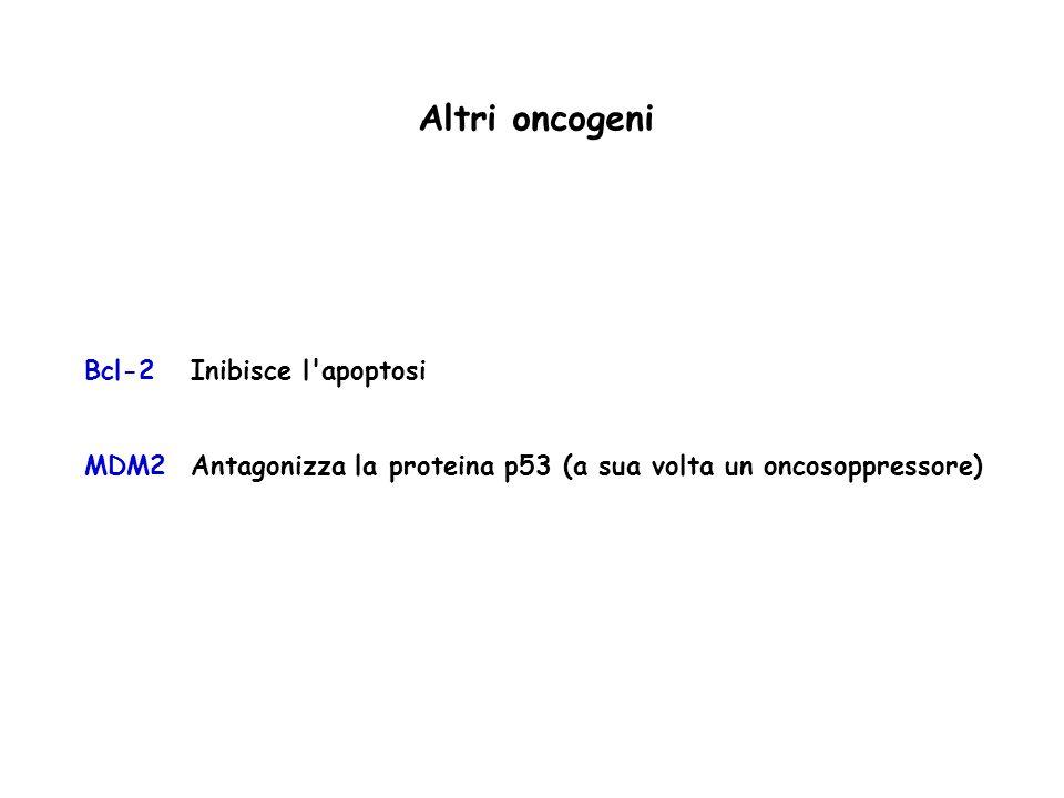 Bcl-2Inibisce l'apoptosi MDM2Antagonizza la proteina p53 (a sua volta un oncosoppressore) Altri oncogeni