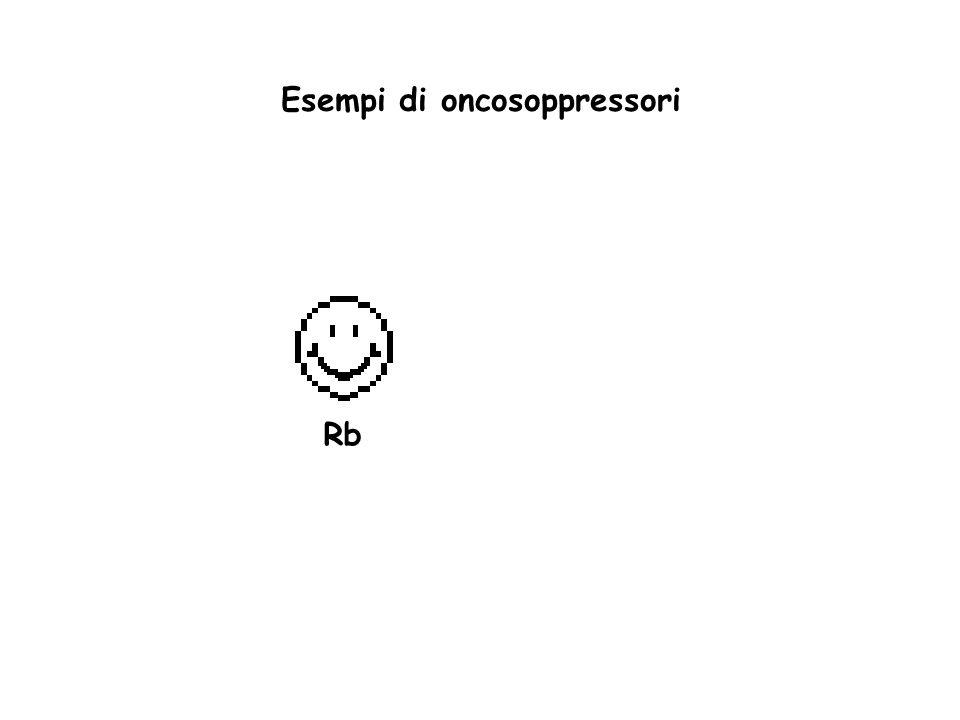 Esempi di oncosoppressori Rb