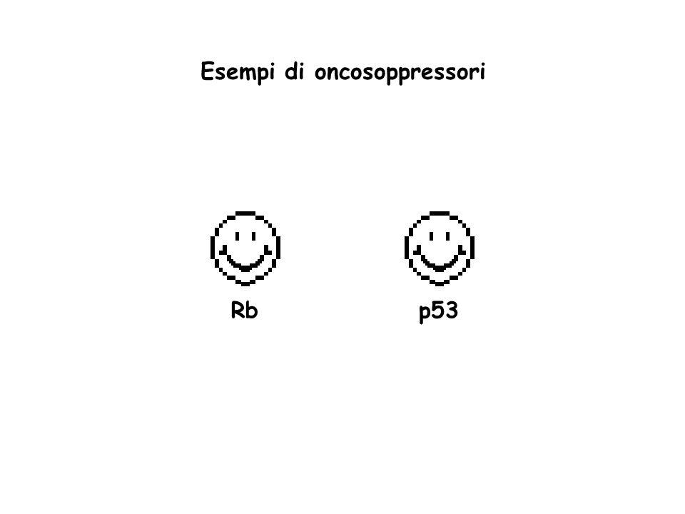 Esempi di oncosoppressori Rb p53