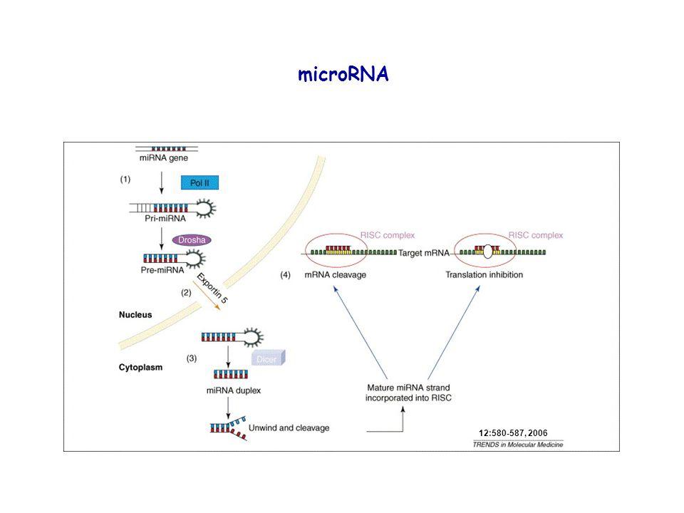 microRNA 12:580-587, 2006