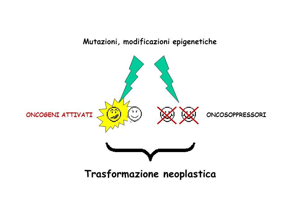 Proto-ONCOGENI Mutazioni, modificazioni epigenetiche ONCOGENI ATTIVATIONCOSOPPRESSORI Trasformazione neoplastica